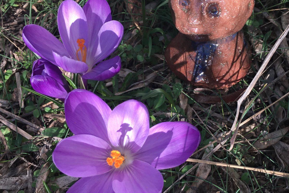 Frühling am Wald-Gymnasium - slide 2