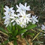 Frühling am Wald-Gymnasium
