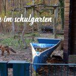 """Wo sich Fuchs und Eichhörnchen """"Guten Tag!"""" sagen"""